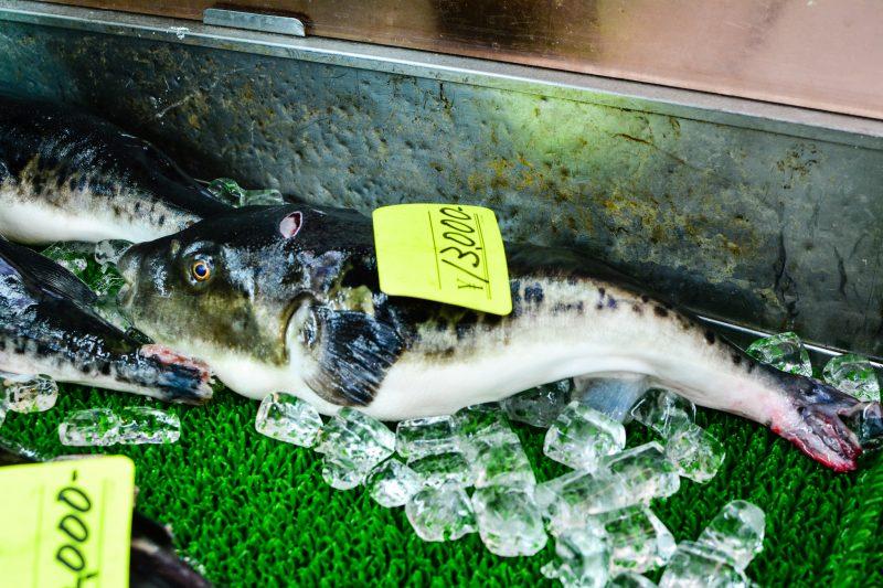 Fugu marché Kuromon